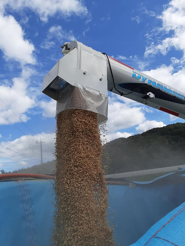 収穫したお米